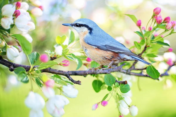 8 razloga da se veselite proljeću