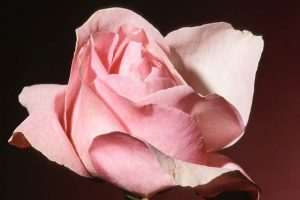 Izliječite ljubavne probleme Feng Shuiem