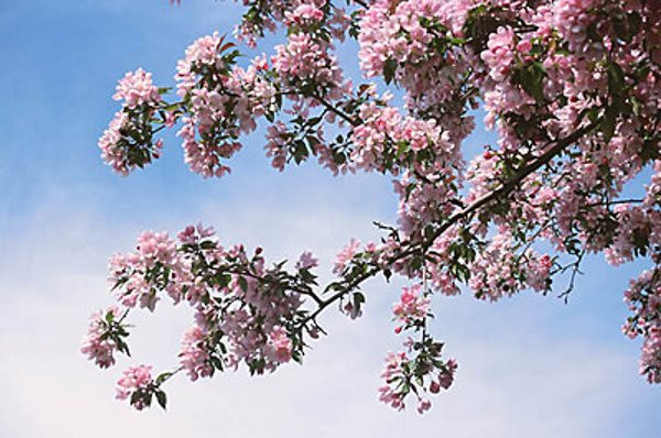 Proljetne alergije [ ZDRAVLJE ]