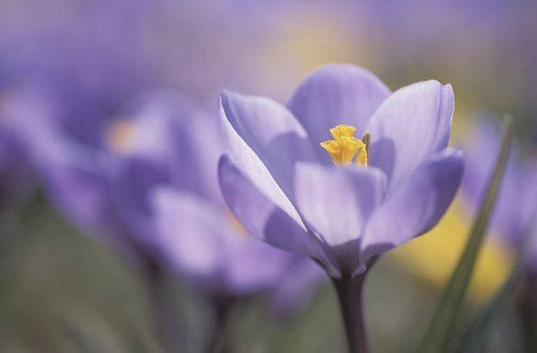 Kako uživati u proljeću i pobijediti proljetni umor [ ZDRAVLJE ]