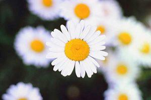 10 načina da se učinite nezaboravnom i da vas ljudi dugo pamte