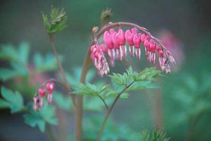 6 savjeta da se zaljubite ovog proljeća [ LJUBAV ]