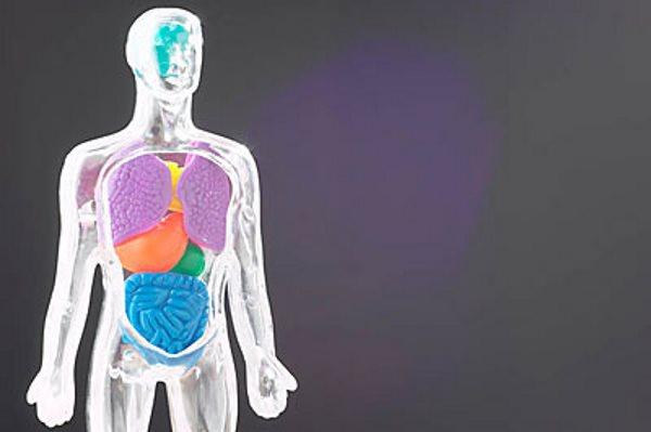 Uobičajeni mitovi o ljudskom tijelu [ ZDRAVLJE ]