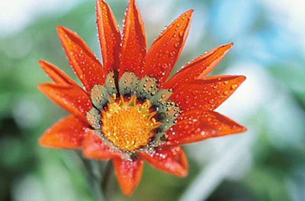 Pojmovnik cvijeća
