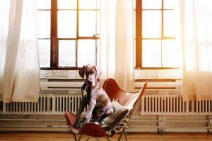 Idealna sobna temperatura za one s kućnim ljubimcima