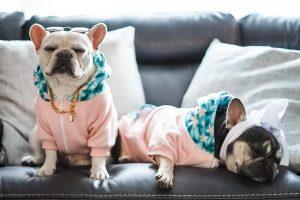 Moderna odjeća za pse i mačke