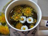 Čaj od maslačka za mršavljenje